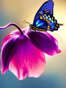 butterfly fc7c4e3eb8857629cd1a3966cbcf5676