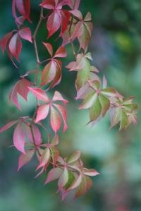 leaves  13813443071un1y