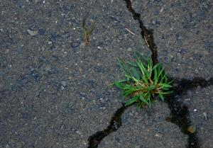 green-grass-on-a-pavement