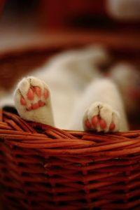 cat feet fe7fa47f2420a7f499614e9cab22885b