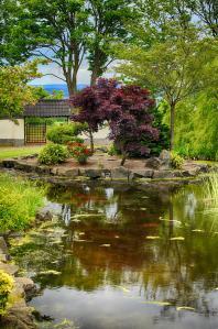 japanese_garden_pond