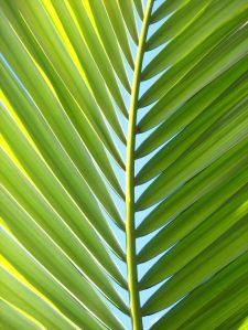 palm branch  9fed5006100727fecf841c313d6dff3b