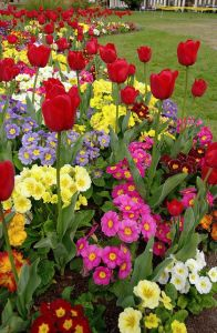 spring flowers  67d1d166f87ae45fd47b06ac84097edb