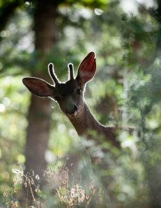 deer  03ae37e2ee203d54e7e62b4a7fb24199