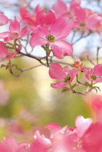 flowers 345fd895811d4848d954d2a3c6972762