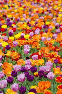 spring flowers ff04de1f169acae081b577bc37254a17